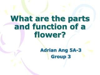 What are the parts and function of a flower?
