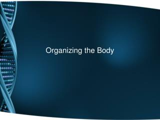 Organizing the Body