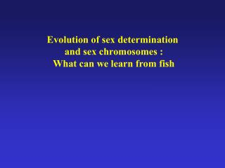 Evolution of sex determination  and sex chromosomes : What can we learn from fish