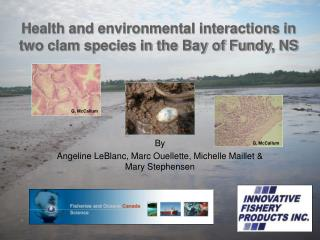 Health and environmental interactions in two clam species in the Bay of Fundy, NS