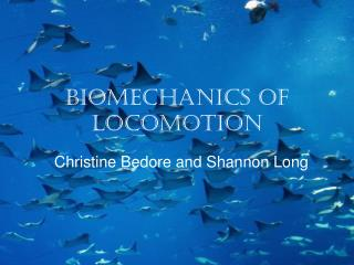 Biomechanics of Locomotion