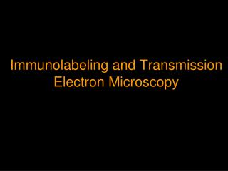 Immunolabeling and Transmission Electron Microscopy