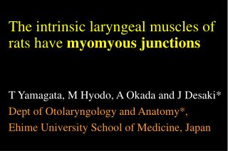 The intrinsic laryngeal muscles of rats have  myomyous junctions