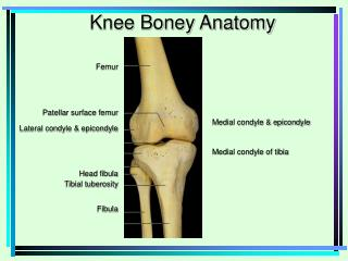 Femur Patellar surface femur Lateral condyle & epicondyle Head fibula Tibial tuberosity Fibula