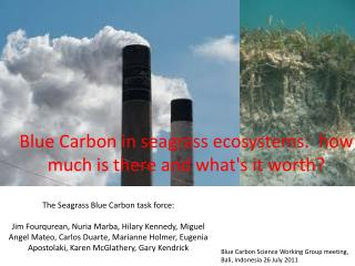 Blue Carbon in seagrass ecosystems:  how much is there and what's it worth?