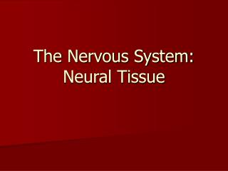 The Nervous System: Neural Tissue