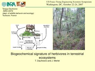 Tanguy Daufresne INRA-CEFS (dept. of wildlife behavior and ecology) Toulouse, France