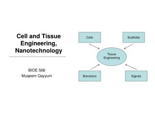 Cell and Tissue Engineering, Nanotechnology