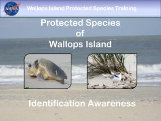 Protected Species  of  Wallops Island