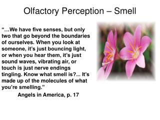 Olfactory Perception – Smell