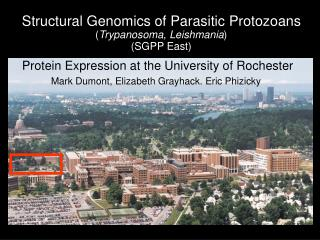 Structural Genomics of Parasitic Protozoans ( Trypanosoma, Leishmania ) (SGPP East)
