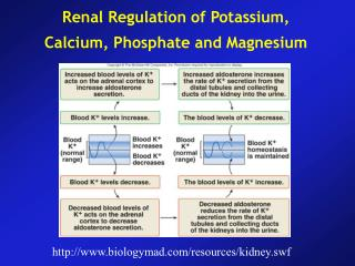 Renal Regulation of Potassium, Calcium, Phosphate and Magnesium