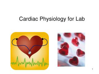 Cardiac Physiology for Lab