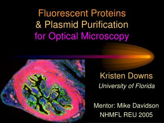 Fluorescent Proteins & Plasmid Purification for Optical Microscopy