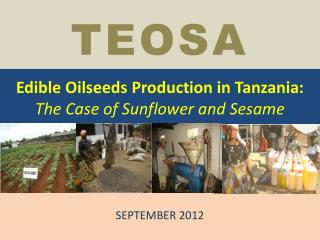 Edible Oilseeds Production in Tanzania:  The Case of Sunflower and Sesame