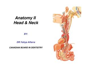 Anatomy II  Head & Neck BY: DR.Yahya Alfarra CANADIAN BOARD IN DENTISTRY