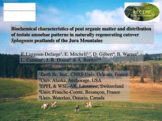 Biochemical characteristics of peat organic matter and distribution