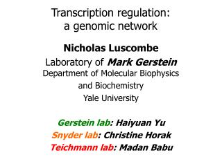 Transcription regulation:  a genomic network