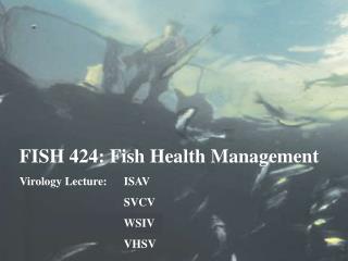 FISH 424: Fish Health Management Virology Lecture:ISAV SVCV WSIV VHSV