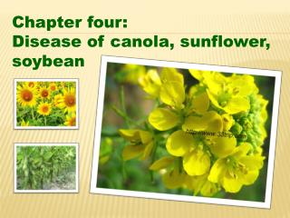 Chapter four: Disease of canola, sunflower, soybean