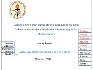 Changes in the brain during chronic exposure to nicotine: