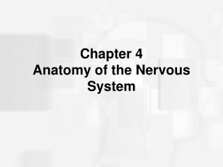 Chapter 4 Anatomy of the Nervous System