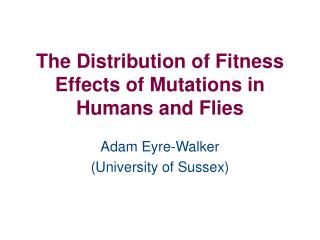The Distribution of Fitness Effects of Mutations in Humans and Flies