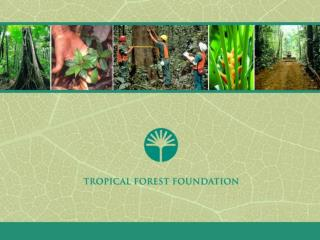 What is the Tropical Forest Foundation (TFF)