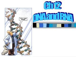 Ch 12  DNA and RNA