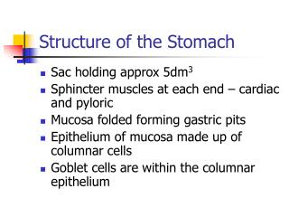Structure of the Stomach