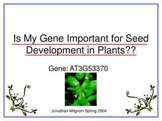 Is My Gene Important for Seed Development in Plants??