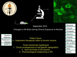 Changes in the Brain during Chronic Exposure to Nicotine