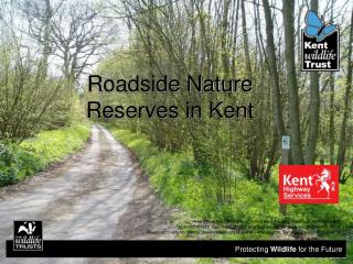 Roadside Nature Reserves in Kent