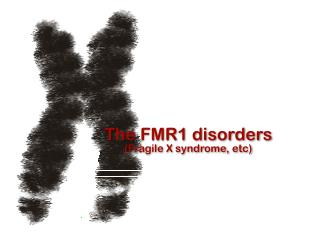 The FMR1 disorders (Fragile X syndrome, etc)