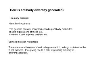 How is antibody diversity generated?