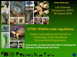 Convention on International Trade in Endangered Species of Wild Fauna and Flora
