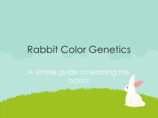Rabbit Color Genetics