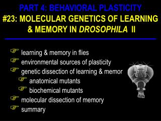 learning & memory in flies  environmental sources of plasticity