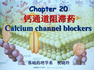 Chapter 20 钙通道阻滞药 Calcium channel blockers