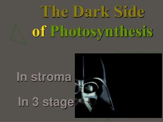 The Dark Side of  Photosynthesis