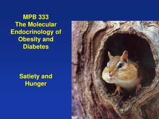 MPB 333  The Molecular Endocrinology of Obesity and Diabetes Satiety and Hunger