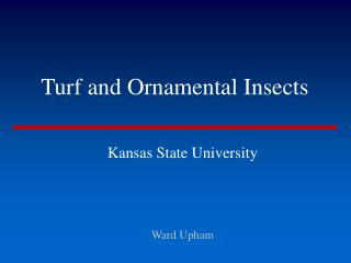 Turf and Ornamental Insects