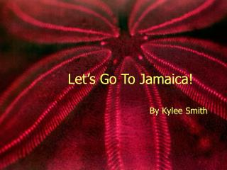 Let's Go To Jamaica!