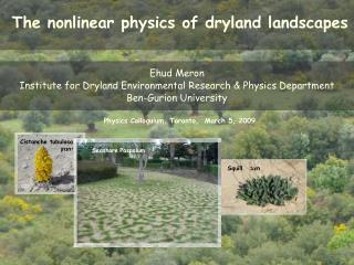 The nonlinear physics of dryland landscapes