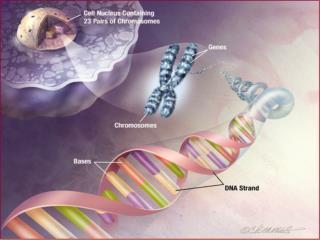Gene Network Modeling
