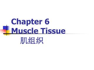 Chapter 6  Muscle Tissue 肌组织
