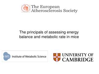 The principals of assessing energy  balance and metabolic rate in mice