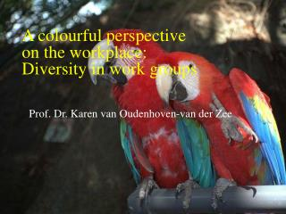 A colourful perspective  on the workplace: Diversity in work groups