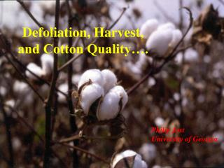 Defoliation, Harvest, and Cotton Quality….
