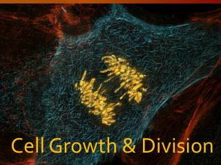 Cell Growth & Division